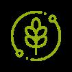 Organic seed grain icon
