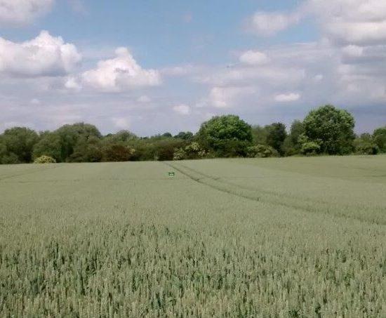 Nelson-e-wheat