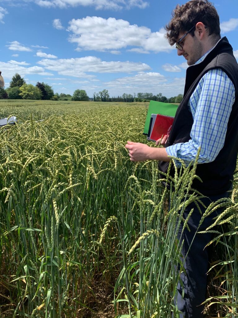 Taylor Moore with winter spelt variety, Convoitise