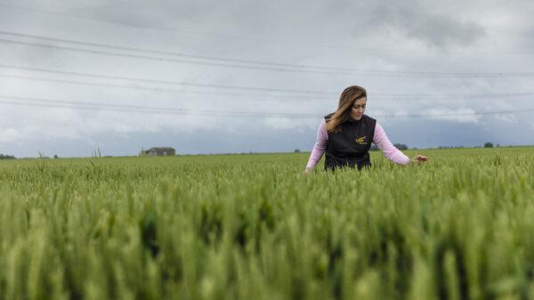 Gemma Clarke, company director, in a field of wheat