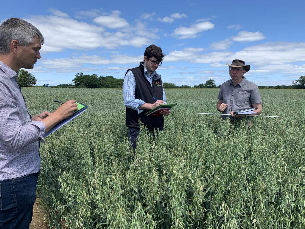 Cope Seeds & Grain team in a field of Delfin spring oats