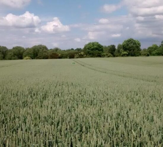 Strong demand for low input UK-grown high protein varieties