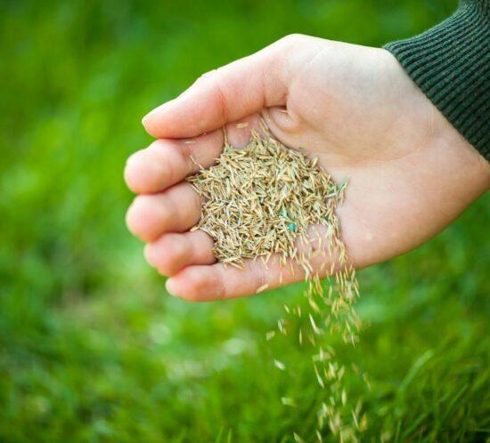 organic seed growers