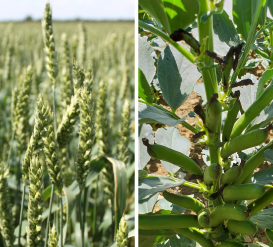 Bi-cropping contract at Cope Seeds & Grain