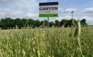 Canyon Saaten Union web
